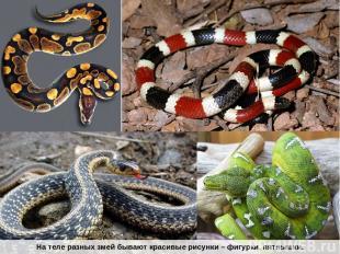 На теле разных змей бывают красивые рисунки – фигурки, пятнышки.
