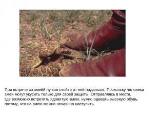 При встрече со змеёй лучше отойти от неё подальше. Поскольку человека змеи могут