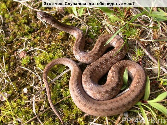 Это змея. Случалось ли тебе видеть змею?