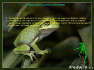 Распространены в районах с тёплым и влажным климатом, а именно в болотах, в озёр
