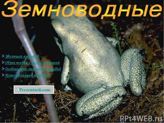Эволюция амфибий Образ жизни и место обитания Особенности строения амфибий Классификация амфибий: Prezentacii.com