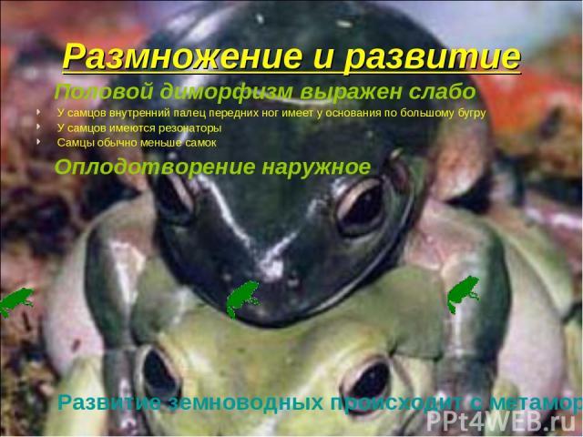 Размножение и развитие Половой диморфизм выражен слабо У самцов внутренний палец передних ног имеет у основания по большому бугру У самцов имеются резонаторы Самцы обычно меньше самок Оплодотворение наружное Развитие земноводных происходит с метаморфозом