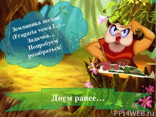 Земляника лесная (Fragaria vesca L.)… Задачка… Попробуем розабраться! Днем ранее
