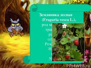 Земляника лесная (Fragaria vesca L.), род многолетних травянистых растений семей
