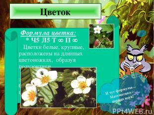 Цветок И тут формулы… Математика – царица наук!