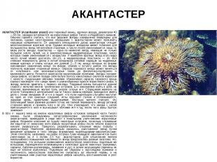АКАНТАСТЕР АКАНТАСТЕР (Acanthaster planci) или терновый венец, крупная звезда, д
