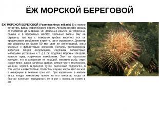 ЁЖ МОРСКОЙ БЕРЕГОВОЙ ЁЖ МОРСКОЙ БЕРЕГОВОЙ (Psammechinus miliaris) Его можно встр