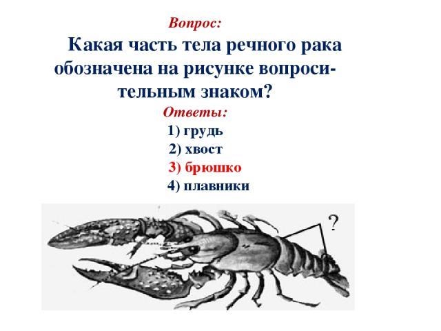 Вопрос: Какая часть тела речного рака обозначена на рисунке вопроси- тельным знаком? Ответы: 1) грудь 2) хвост 3) брюшко 4) плавники