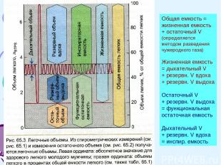 Общая емкость = жизненная емкость + остаточный V (определяется методом разведени