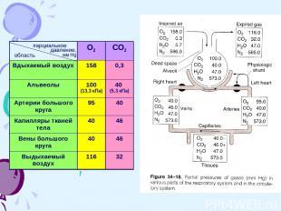 парциальное давление, мм Hg область О2 СО2 Вдыхаемый воздух 158 0,3 Альвеолы 100