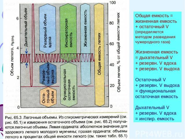 Общая емкость = жизненная емкость + остаточный V (определяется методом разведения чужеродного газа) Жизненная емкость = дыхательный V + резервн. V вдоха + резервн. V выдоха Остаточный V + резервн. V выдоха = функциональная остаточная емкость Дыхател…