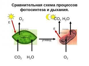 Сравнительная схема процессов фотосинтеза и дыхания. O2 CO2 H2O фотосинтез Е дых