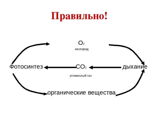 Правильно! О2 кислород Фотосинтез СО2 дыхание углекислый газ органические вещества