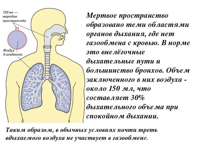 Мертвое пространство образовано теми областями органов дыхания, где нет газообмена с кровью. В норме это внелёгочные дыхательные пути и большинство бронхов. Объем заключенного в них воздуха - около 150 мл, что составляет 30% дыхательного объема при …