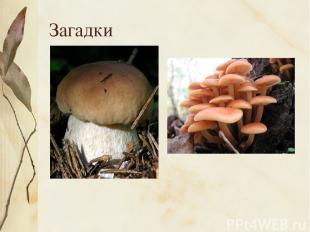 Загадки Царь грибов на толстой ножке – Самый лучший для лукошка. Он головку держ