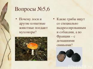 Вопросы №5,6 Почему лоси и другие копытные животные поедают мухоморы? Какие гриб