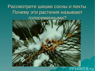 * Яковлева Л.А. * Рассмотрите шишки сосны и пихты. Почему эти растения называют