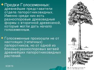 Предки Голосеменных: древнейшие представители отдела папоротниковидных. Именно с