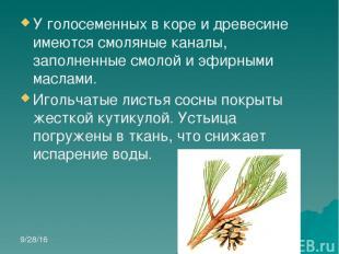 У голосеменных в коре и древесине имеются смоляные каналы, заполненные смолой и