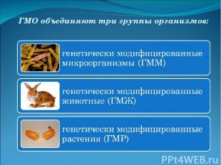 ГМО объединяют три группы организмов: