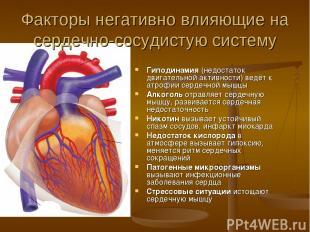 Факторы негативно влияющие на сердечно-сосудистую систему Гиподинамия (недостато