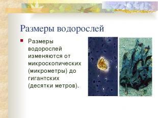 Размеры водорослей Размеры водорослей изменяются от микроскопических (микрометры
