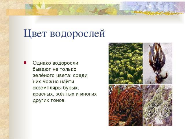 Цвет водорослей Однако водоросли бывают не только зелёного цвета: среди них можно найти экземпляры бурых, красных, жёлтых и многих других тонов.