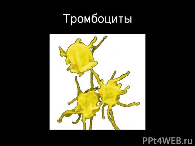 Тромбоциты
