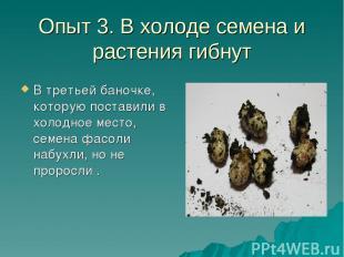 Опыт 3. В холоде семена и растения гибнут В третьей баночке, которую поставили в