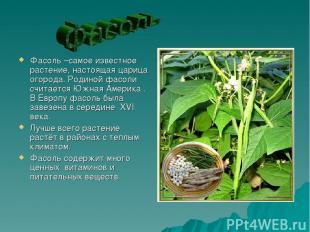 Фасоль –самое известное растение, настоящая царица огорода. Родиной фасоли счита