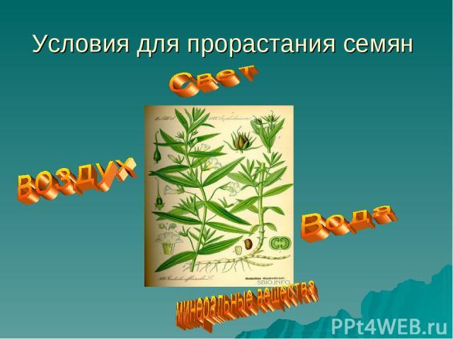 Условия для прорастания семян