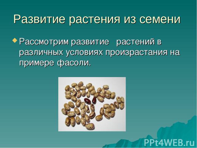 Развитие растения из семени Рассмотрим развитие растений в различных условиях произрастания на примере фасоли.
