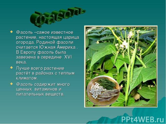 Фасоль –самое известное растение, настоящая царица огорода. Родиной фасоли считается Южная Америка . В Европу фасоль была завезена в середине XVI века. Лучше всего растение растёт в районах с теплым климатом. Фасоль содержит много ценных витаминов и…