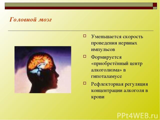 Головной мозг Уменьшается скорость проведения нервных импульсов Формируется «приобретённый центр алкоголизма» в гипоталамусе Рефлекторная регуляция концентрации алкоголя в крови