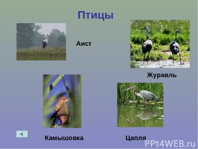 Птицы Аист Журавль Цапля Камышовка