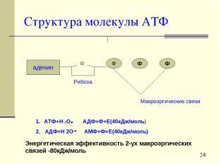 Структура молекулы АТФ аденин Ф Ф Ф Рибоза Макроэргические связи АТФ+Н 2О АДФ+Ф+