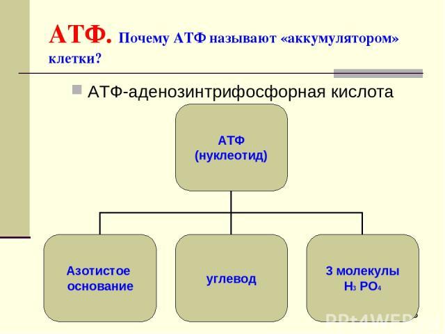 АТФ. Почему АТФ называют «аккумулятором» клетки? АТФ-аденозинтрифосфорная кислота