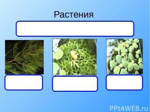 Растения уруть папоротник Писция Дают органический вещества и кислород, а получа
