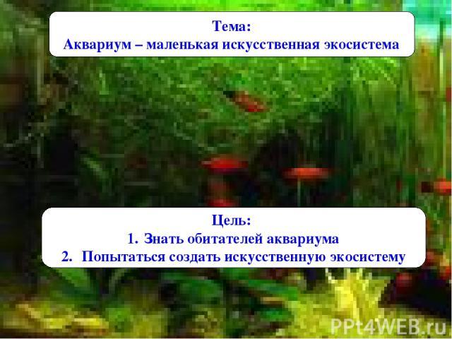 Тема: Аквариум – маленькая искусственная экосистема Цель: Знать обитателей аквариума Попытаться создать искусственную экосистему