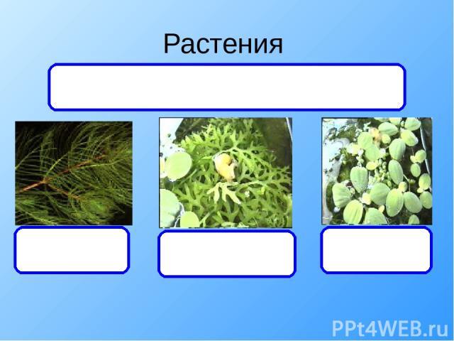 Растения уруть папоротник Писция Дают органический вещества и кислород, а получают углекислый газ и минеральные вещества