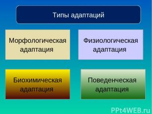 Типы адаптаций Морфологическая адаптация Биохимическая адаптация Физиологическая