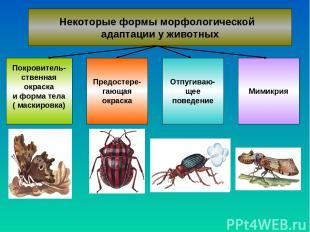 Некоторые формы морфологической адаптации у животных Покровитель- ственная окрас