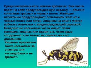 Среди насекомых есть немало ядовитых. Они часто носят на себе предупреждающую ок