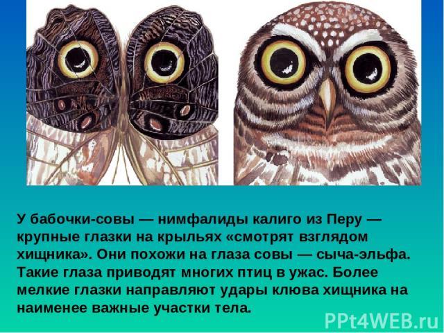 У бабочки-совы — нимфалиды калиго из Перу— крупные глазки на крыльях «смотрят взглядом хищника». Онипохожи на глаза совы— сыча-эльфа. Такие глаза приводят многих птиц в ужас. Более мелкие глазки направляют удары клюва хищника на наименее важные у…