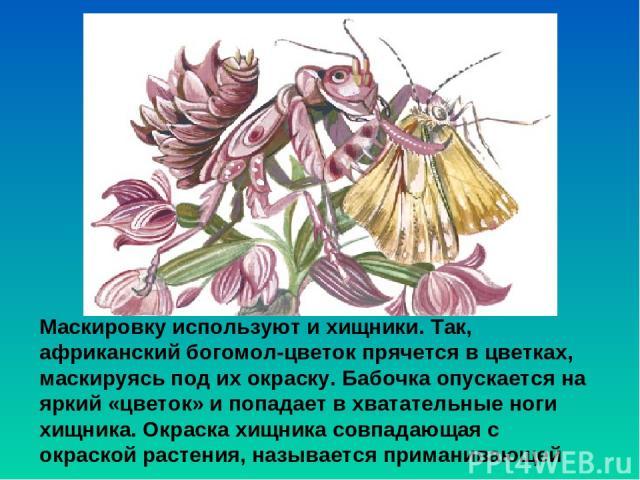 Маскировку используют и хищники. Так, африканский богомол-цветок прячется в цветках, маскируясь под ихокраску. Бабочка опускается на яркий «цветок» и попадает в хватательные ноги хищника. Окраска хищника совпадающая с окраской растения, называется …