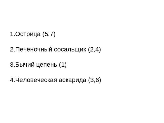 1.Острица (5,7) 2.Печеночный сосальщик (2,4) 3.Бычий цепень (1) 4.Человеческая аскарида (3,6)