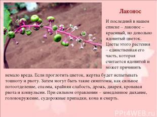 Лаконос И последний в нашем списке – лаконос – красивый, но довольно ядовитый цв