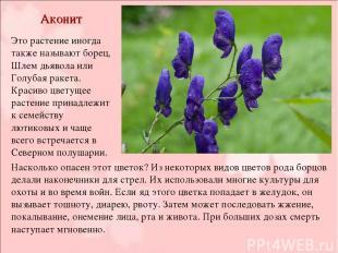 Аконит Это растение иногда также называют борец, Шлем дьявола или Голубая ракета