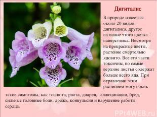 Дигиталис В природе известны около 20 видов дигиталиса, другое название этого цв