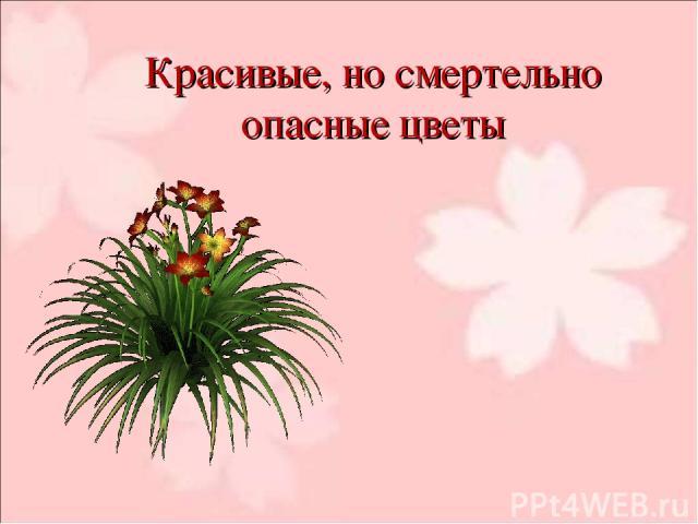 Красивые, но смертельно опасные цветы